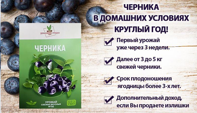 Домашняя ягодница «Кладовая природы» – черника свойства