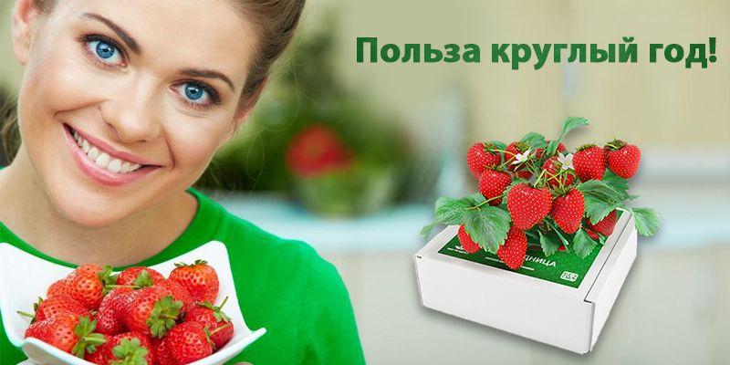 купить Чудо-ягодница «Сказочный сбор»