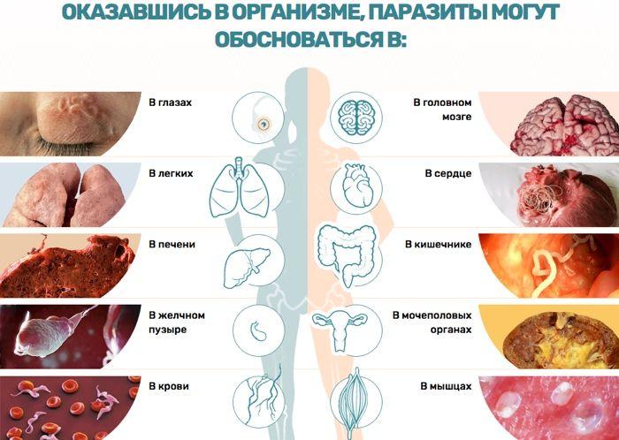 Unitox (Унитокс) - средство от паразитов свойства