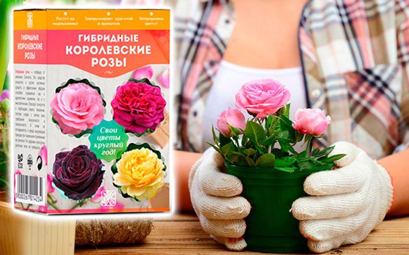 купить Гибридные королевские розы