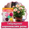 Гибридные королевские розы