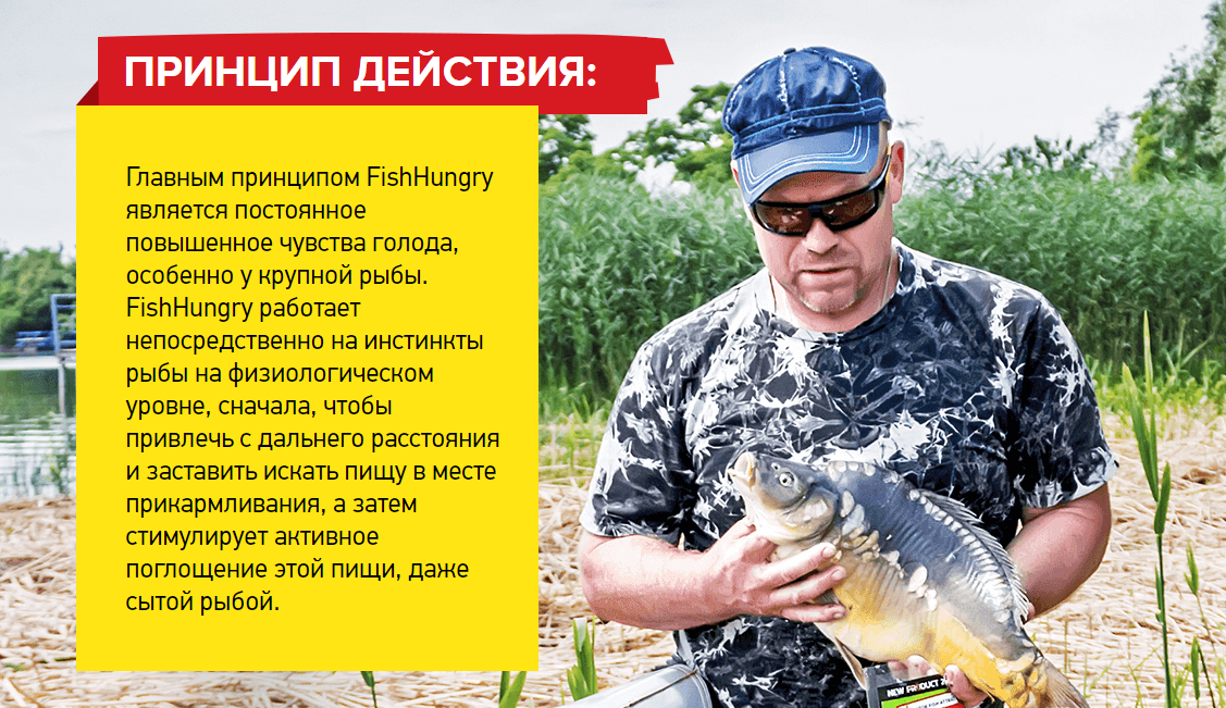 Fishhungry действие